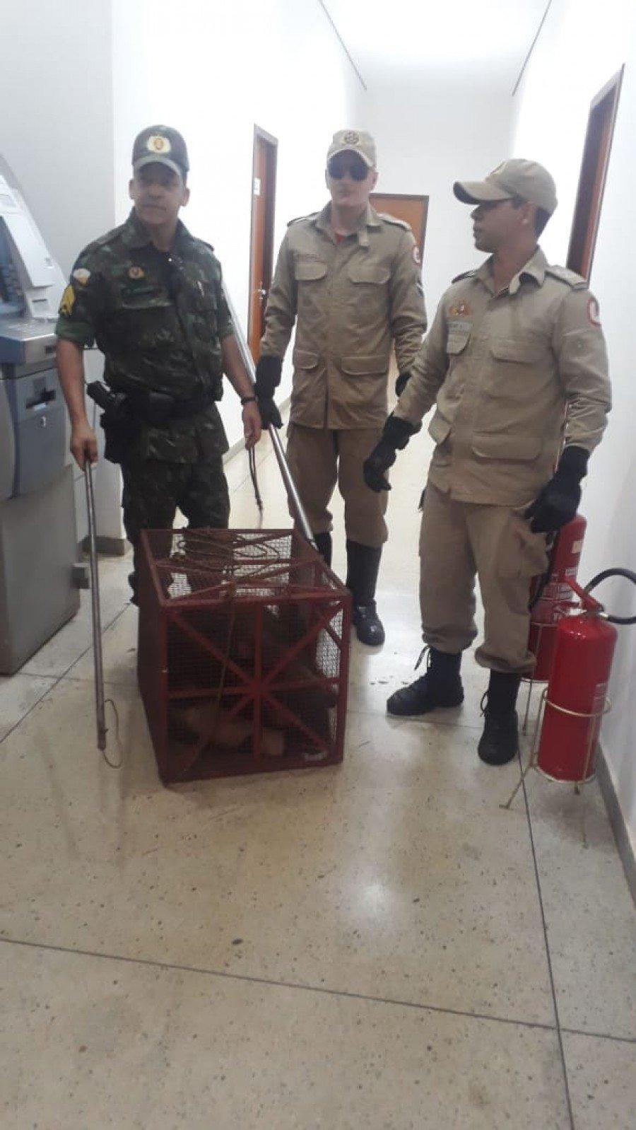 As equipes da PM e Bombeiros realizaram a captura do animal (Foto: Ascom PMTO)