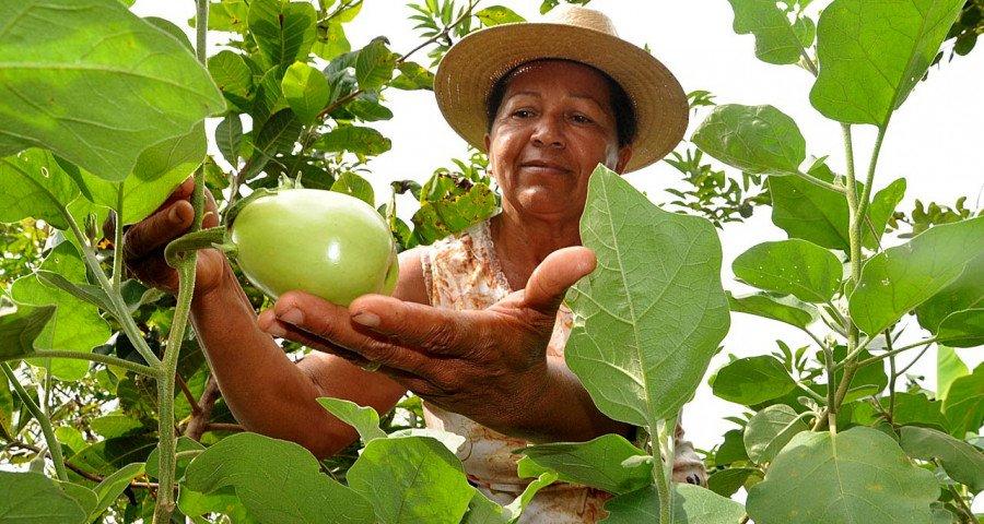 O Tocantins é o celeiro da agricultura familiar desenvolvida por cerca de aproximadamente 42 mil famílias, distribuídas em 540 assentamentos