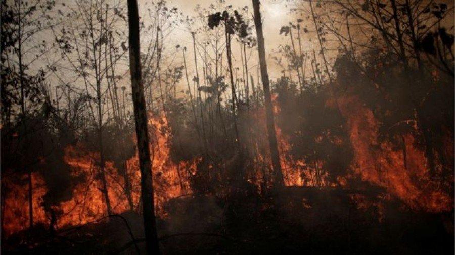 Região amazônica não possui a mesma capacidade de lidar com o fogo do que o Cerrado (Foto: REUTERS)