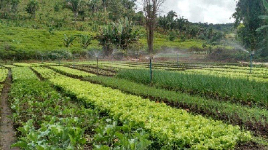 Agricultores que tiveram seus débitos inscritos em dívida ativa até 31 de outubro de 2018 terão direito ao benefício