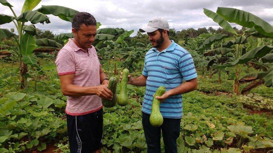 Ruraltins estimula plantio consorciado e alcança resultados positivos no Bico do Papagaio