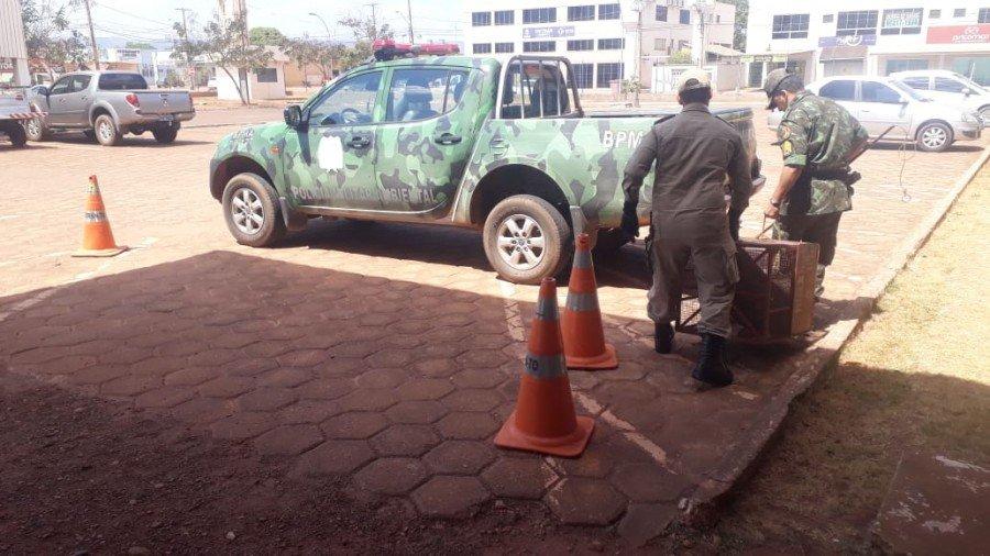Depois de capturado o tamanduá foi transportado para local de soltura (Foto: Ascom PMTO)