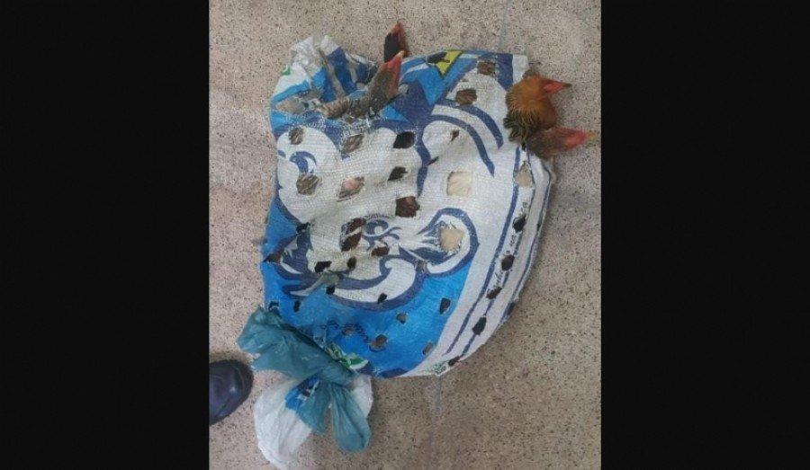 Segundo moradores da região, o roubo de galinha é recorrente na localidade. (Foto: Divulgação)