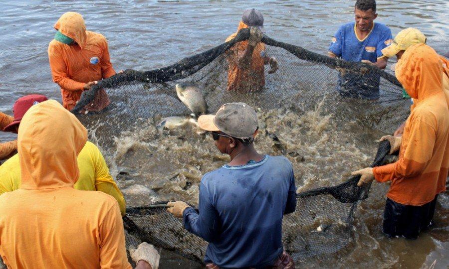 Piscicultura tocantinense produz 14,3  mil toneladas de pescado por ano e está presente em 22 municípios do Bico do Papagaio