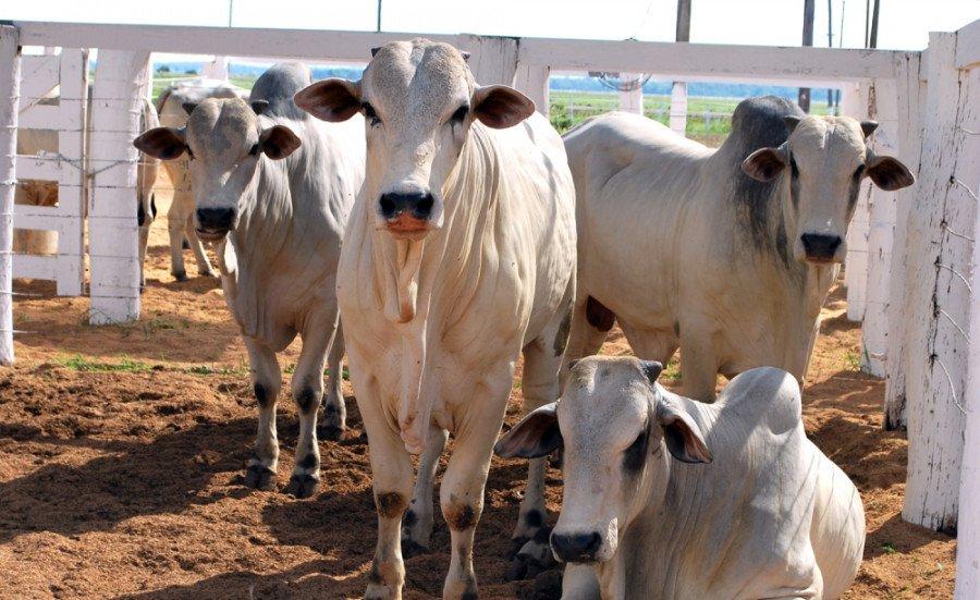Antecipação da vacinação antiaftosa para animais que vão participar de eventos agropecuários poderá ser requerida na Adapec