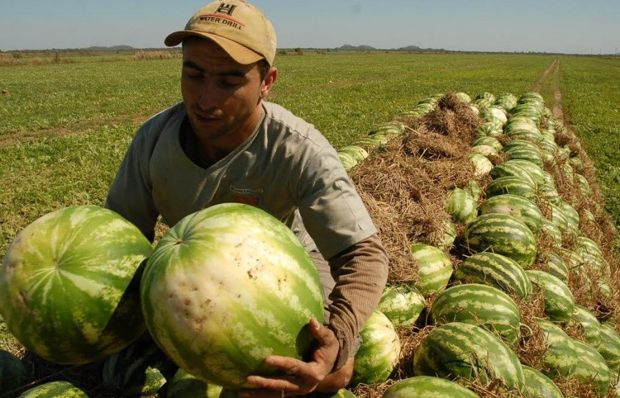 Ruraltins inicia projeto de assistência técnica para médios produtores