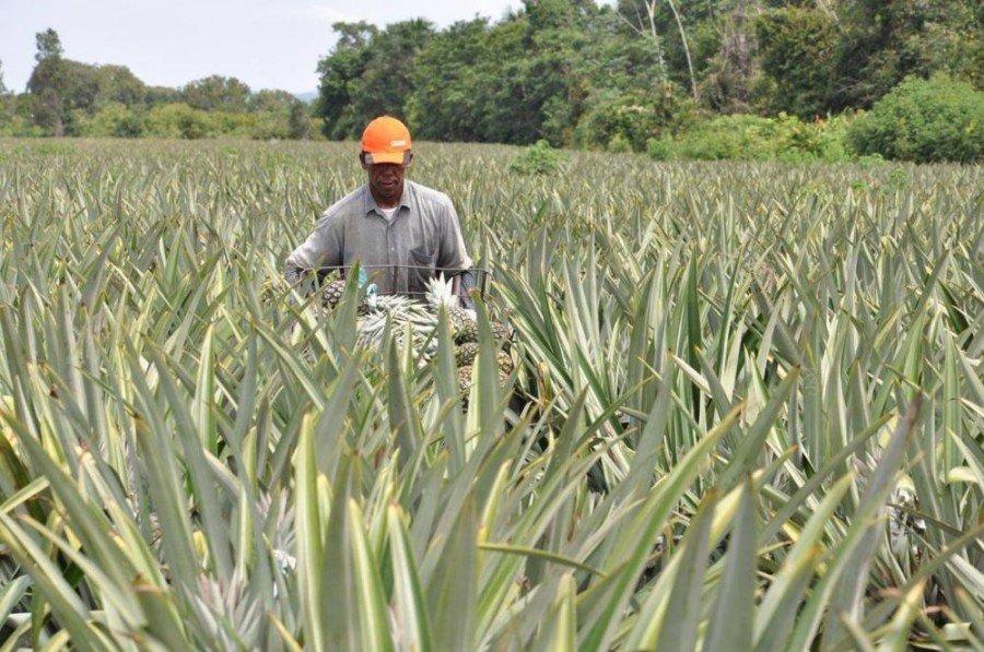 Extensionistas rurais monitoram ações de produtores