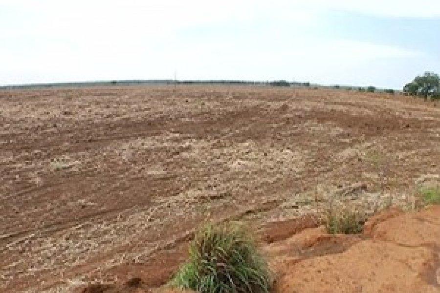 Moradores denunciam desmatamento de área ambiental, no distrito de Taquaruçu, em Palmas (Foto: Reprodução/TV Anhanguera)