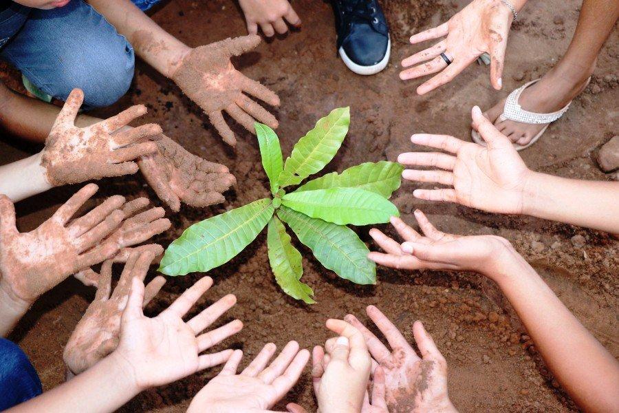 Momento de plantio de mudas na Escola Irmãos Filgueiras (Foto: Lidiane Moreira)