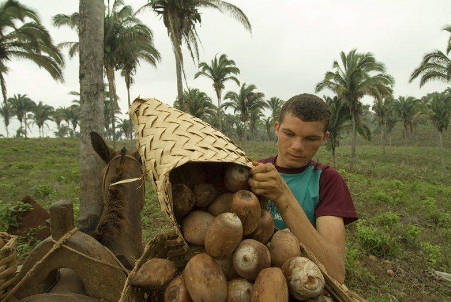 Mil e quinhentos extrativistas são parceiros da Tobasa Bioindustrial no Norte de Tocantins