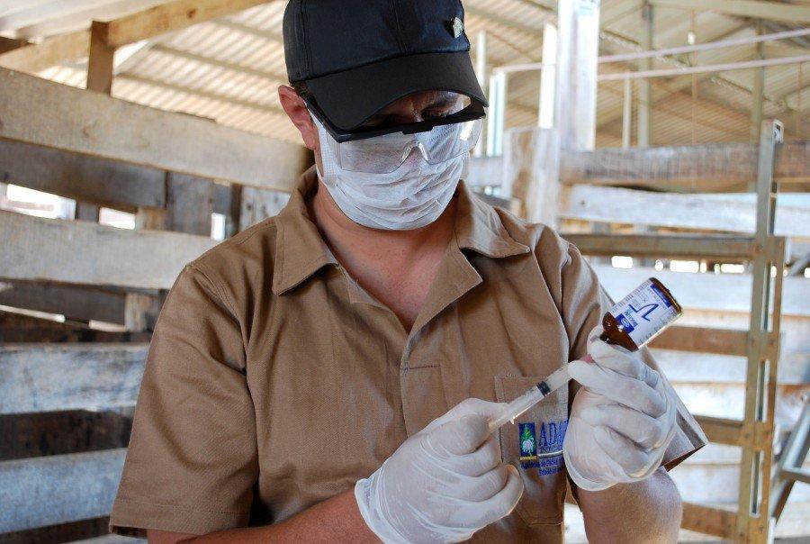 Após a vacinação, o produtor deve declarar ato na Adapec (Foto: Fabíola Dias)