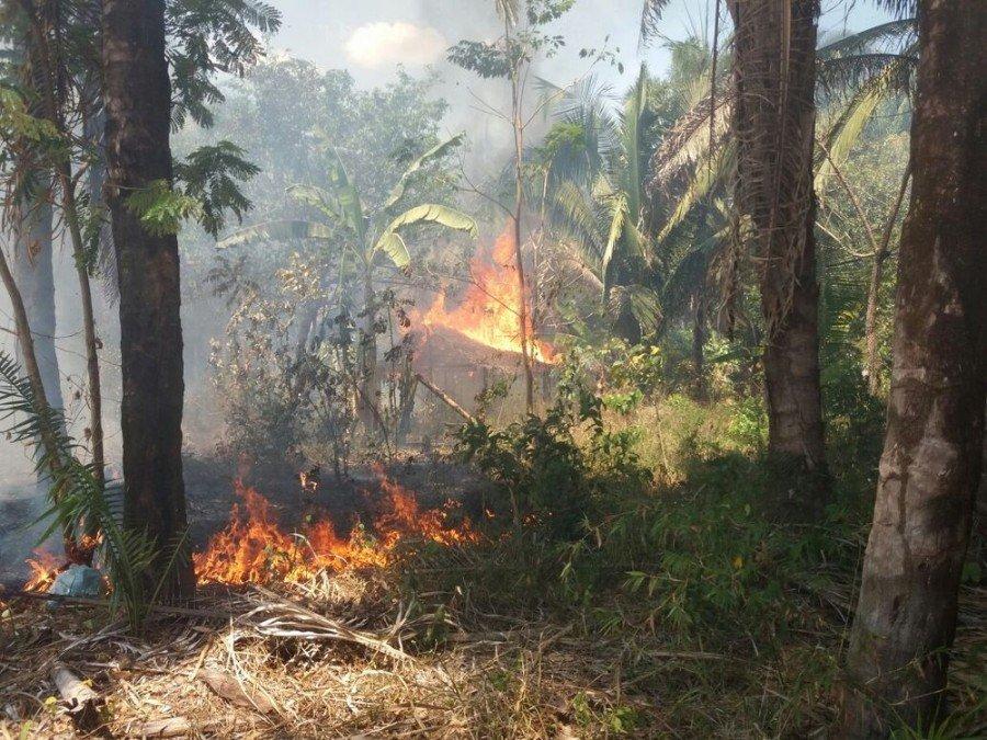 Fogo destruiu casas e plantações em comunidade quilombola (Foto: Fabrício Barros/Divulgação)