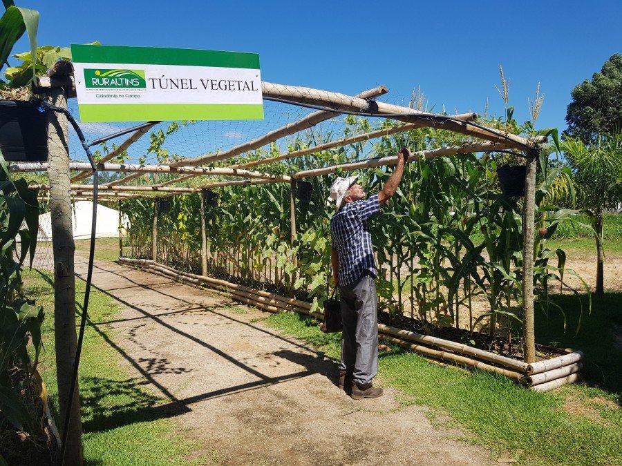 Unidades de produção agrícolas chamaram a atenção dos visitantes na Agrotins 2018