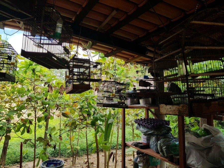 Pássaros foram apreendidos pela PM Ambiental em Riachinho (Foto: PM Ambiental/Divulgação)