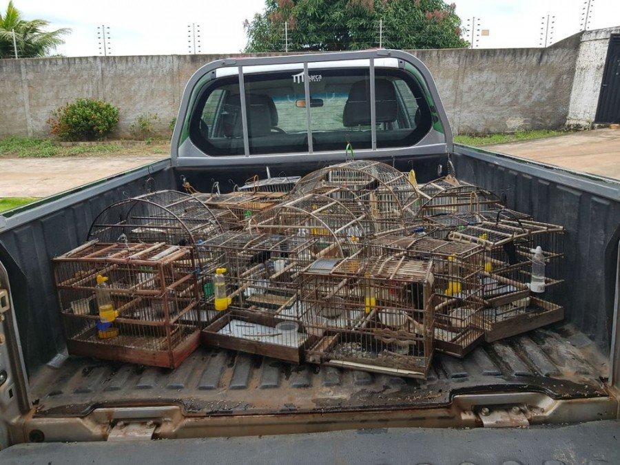 Pássaros foram encontrados em gaiolas (Foto: PM Ambiental/Divulgação)