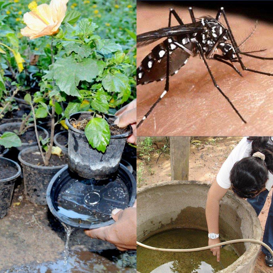 Casos prováveis de doenças transmitidas pelo mosquito Aedes aegypti dispararam no Tocantins
